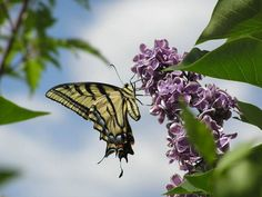 бабочка на цветке вектор