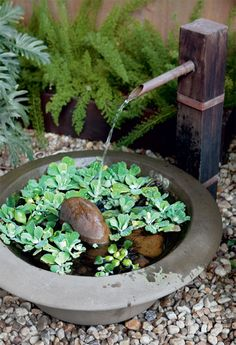 Compact water features, small-space landscaping, garden inspiration, and of course all things relating to container water gardening, patio ponds and much more.