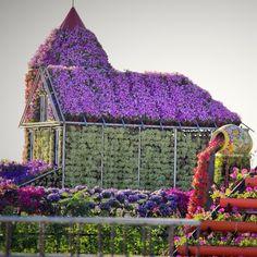 Dubai Miracle Garden, Dubai, United Arab Emirates — by Ahmed Hamada