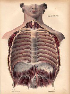 """Cómo desbloquear el diafragma: Respirar mal es una epidemia en nuestra cultura y está favorecida por el estilo de vida moderno en el que pervade el estrés y la falta de ejercicio. En este vídeo utilizo esta aplicación para ilustrar la anatomía del diafragma y ofrecer unas prácticas que utilizo para re-calibrar mi respiración cuando noto que se """"bloquea."""""""