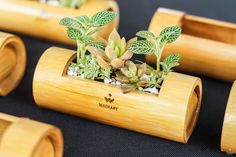 Bamboo Pot - Wadiary Design by Neo Nguyen