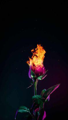 Burning Rose Wallpaper - IPhone Wallpapers