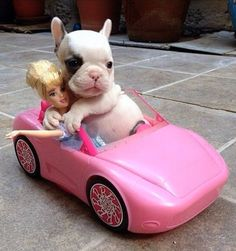 Cutest Puppy Ever Hug - Barbie Adopts Dog He Drives Them Home in Her Pink Car ---- best hilarious jokes funny pictures walmart humor fail