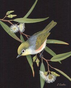 Shop art by Lyn Cooke - 13 artworks for sale on Bluethumb. Watercolor Bird, Watercolor Animals, Exotic Birds, Colorful Birds, Gravure Illustration, Australian Animals, Bird Drawings, Bird Design, Bird Prints