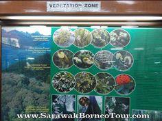 Kinabalu Park, Sabah Kinabalu Park, Painting, Art, Art Background, Painting Art, Kunst, Paintings, Performing Arts, Painted Canvas