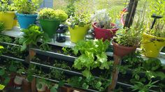 Gardening, Plants, Gutter Garden, Projects, Lawn And Garden, Plant, Planets, Horticulture