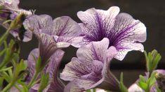 Každým dnem bude třeba zazimovat letněné rostliny. A před stěhováním do domu je třeba je ošetřit proti škůdcům. Christmas Diy, Diy And Crafts, Plants, Image, Gardening, Decor, Lawn And Garden, Decoration, Plant