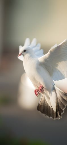 Dove bird photography animals 23 ideas for 2019 Dove Images, Dove Pictures, Nature Pictures, Beautiful Nature Wallpaper, Beautiful Birds, Animals Beautiful, Animal Photography, Nature Photography, Arte Judaica