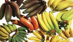 Flavors of Brazil: FRUITS OF BRAZIL - Banana varieties