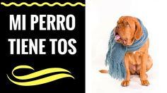 Mi perro tiene tos - 3 Enfermedades que producen Tos en los perros.
