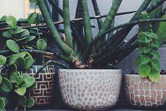 いかがでしたか? 今回ご紹介した3ブランドは、オリジナリティが溢れる、独特の世界観があるものばかり。 インテリアに取り入れると、そのお部屋全体が違った雰囲気になるのもまた楽しみですね。 植物を愛する心を、ぜひ鉢のセレクトにもつなげてみてください。