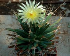 feed2know: 10 Of The Most Unique Cacti