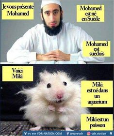 this-is-hasan-he-was-born-in-sweden-hasan-is-swedish-muslim-this-is-misho-he-was-born-in-an-aquarium-misho-is-a-fish-hamster-comparison-trolling. Reaction Pictures, Funny Pictures, Funny Pics, Pedobear, Witty Quotes, Adult Humor, The Hobbit, Sports And Politics, Good News