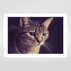 Fine art Fofuras Felinas por Giane Portal R$48,00