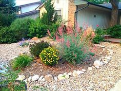 high prairie xeriscape - Google Search