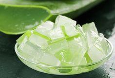 En phytothérapie, en dermatologie ou en cosmétologie, l'aloe vera est utilisé depuis 6000 ans dans bien des domaines, sous forme de gel et de crème. Une nouvelle étude vient aujourd'hui confirmer ses vertus antidiabétiques.