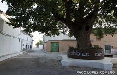 Recorriendo Albacete: CANTOBLANCO