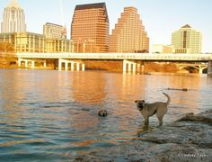 Austin City Guide + With Love from Austin, Texas [PHOTOS] « Articles « Voyage Vixens
