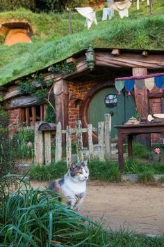 Brick 'Hobbit House' with green roof