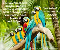 Find Group Colorful Macaw On Tree stock images and royalty free photos in HD. Explore millions of stock photos, images, illustrations, and vectors in the Shutterstock creative collection. of new pictures added daily. Mirror Quotes, Cupcake Drawing, Famous Quotes About Life, Foto Poster, Magic Quotes, Tree Images, Magic Mirror, Colorful Animals, Inspirational Quotes About Love