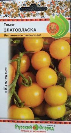 CÀ CHUA CHERY MÀU VÀNG  Cà chua cherry vàng là loại nhỏ của cà chua thông thường. Quả tròn hoặc dài, màu đỏ đều rất đẹp. Cà chua bi có hình dáng nhỏ, bóng đẹp với màu đỏ hoặc vàng tươi khi chín. Cà chua bi có hàm lượng dinh dưỡng tương tự các loại cà chua thông thường. Tuy nhiên một số loại cà chua bi có vị ngọt thanh, do vậy thường được các chị em ưu thích sử dụng như một loại trái cây