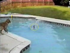video;mom dog saves her puppy from drowning