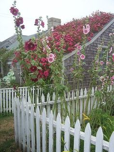 Hollyhock garden from Home and Hearth