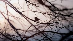 Low Angle View of Bird Perching on Bare Tree - download photo at Avopix.com for free    ✅ https://avopix.com/photo/63185-low-angle-view-of-bird-perching-on-bare-tree    #branchlet #branch #plant #tree #leaf #avopix #free #photos #public #domain