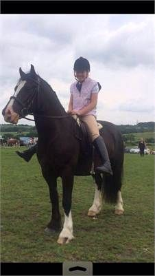 Stunning Welsh Section D x For Sale - horses for sale http://www.equineclassifieds.co.uk/Horse/horses-for-sale-listing-1147.aspx#.VIq6Lcm4qq0