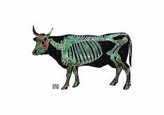 Galaxy Cow