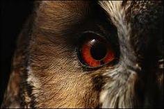 Owl - Wisdom and Transformation
