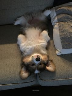 It's important to try to tire out your dog physically, but remember that dogs have creative, active minds that need stimulation as well. 7 Fun Ways to Tire Out Your Dog. ways to tire out your puppy. Cute Corgi Puppy, Corgi Dog, Cute Dogs And Puppies, Baby Dogs, Pet Dogs, Cute Little Animals, Cute Funny Animals, Cute Animal Pictures, Cute Creatures