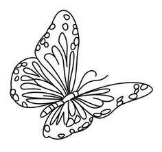 """iColor """"Butterflies"""""""