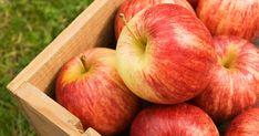 Descubra los muchos beneficios de salud que puede obtener al comer una manzana al día. http://articulos.mercola.com/sitios/articulos/archivo/2015/05/31/beneficios-de-salud-de-las-manzanas.aspx