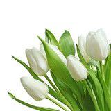 Photo : white tulips bouquet