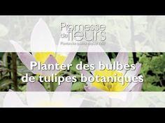 Promesse de Fleurs - YouTube Comment Planter, Planters, Gardens, Planting Tulip Bulbs, Spring Bulbs, Botany, Plant, Window Boxes, Pot Holders