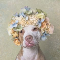 Flowerpower: Pit Bulls of the Revolution by Sophie Gamand