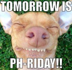 Friday! Tuna Melts My Heart.