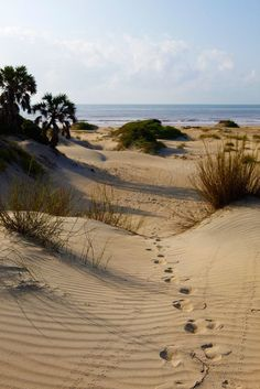 My family always used to go to Mablethorpe for our holidays. Dad used to take us traipsing round the sand dunes, and we would all pretend that we were explorers in a jungle. :) (Our sand dunes had a lot more foliage growing on them than these do!) :D