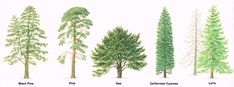 trees-01.png (1416×526)
