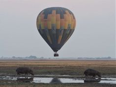 Hot air ballooning is an unforgettable way to watch the sun rise over the Busanga Plains, and take in the phenomenal abundance of game Lion Pride, Close Proximity, Abundance, Wilderness, Safari, Sunrise, Camping, Watch