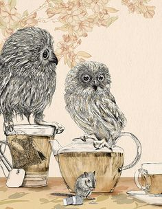owls and tea