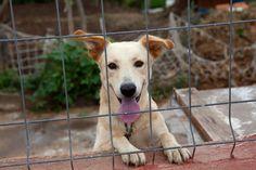 Este era Taison en su cárcel. Viendo el mundo a través de una reja y atado a una cadena. Sin poder pasear, ni correr, ni jugar. Pese a todo ello, en su mirada no habia rencor, solo ganas de vivir y disfrutar.  Ahora disfruta jugando con otros perros en su nuevo hogar.