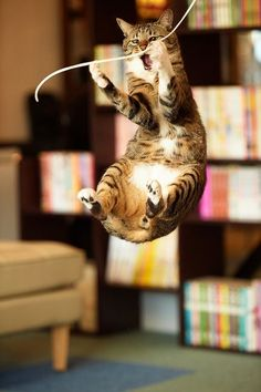 Tabby cat jumping for string I Love Cats, Crazy Cats, Cool Cats, Funny Cats, Funny Animals, Cute Animals, Funny Minion, Funny Jokes, Animal Gato