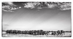 African Wildlife prints by Dave Hamman. Fine art images for sale on fine art canvas or fine art paper. Wildlife image collection of great images African Elephant, African Animals, Herd Of Elephants, Sales Image, Wildlife Art, Prints For Sale, Fine Art Paper, Art Images, Fine Art Prints
