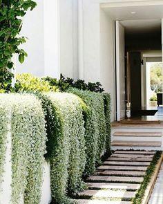 Gorgeous side garden and entryway / Hermoso jardín lateral Dream Garden, Home And Garden, Garden Modern, Outdoor Walkway, Paver Walkway, Side Walkway, Paver Sand, Paver Edging, Paver Stones