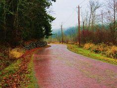 walk the red brick road