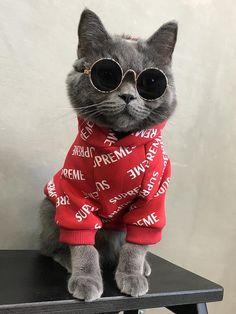 17 Dakota S Dream Room Ideas Boys Rug Cute Baby Cats Roblox Cake