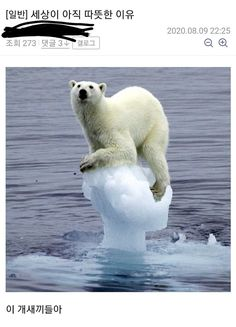 Cute Baby Animals, Animals And Pets, Funny Animals, Wild Animals, Funniest Animals, Animal Funnies, Arctic Animals, Animal Humour, Animal Quotes