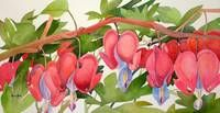 "Stunning ""Bleeding Heart"" Painting Reproductions For Sale On Fine Art Prints"